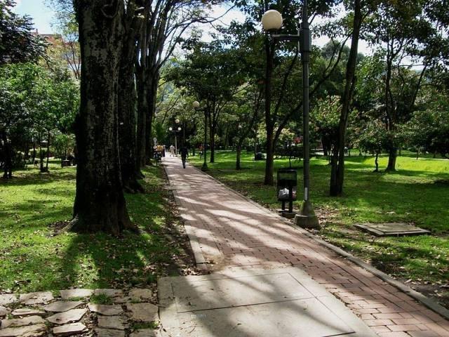 Evalúan estado de árboles por humedad en parques de Arequipa