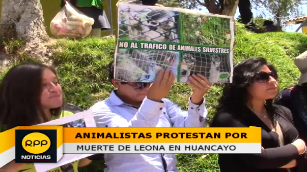 El protestante en ropa interior, exigió que las autoridades investiguen el deceso de la leona