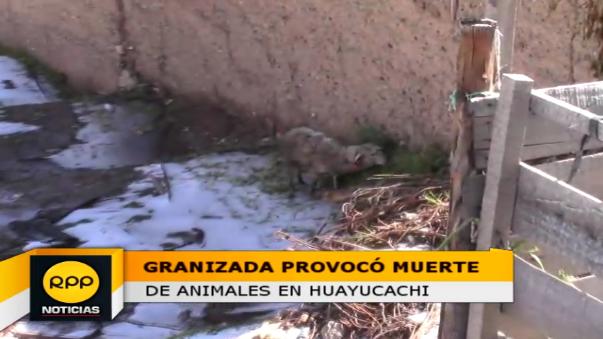Una de las residentes perdió 60 cabezas entre hembras preñadas y padrillos, quedando con deudas con el banco.