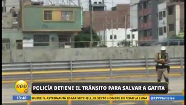 Policía rescata a gatita de vía de El Metropolitano
