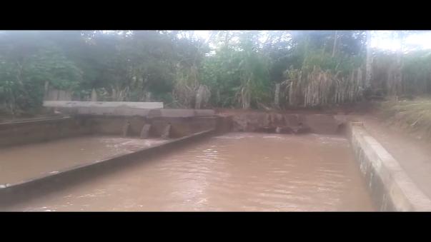 Fuertes lluvias y desborde de ríos afectan el negocio de piscigranjas en la región San Martín.
