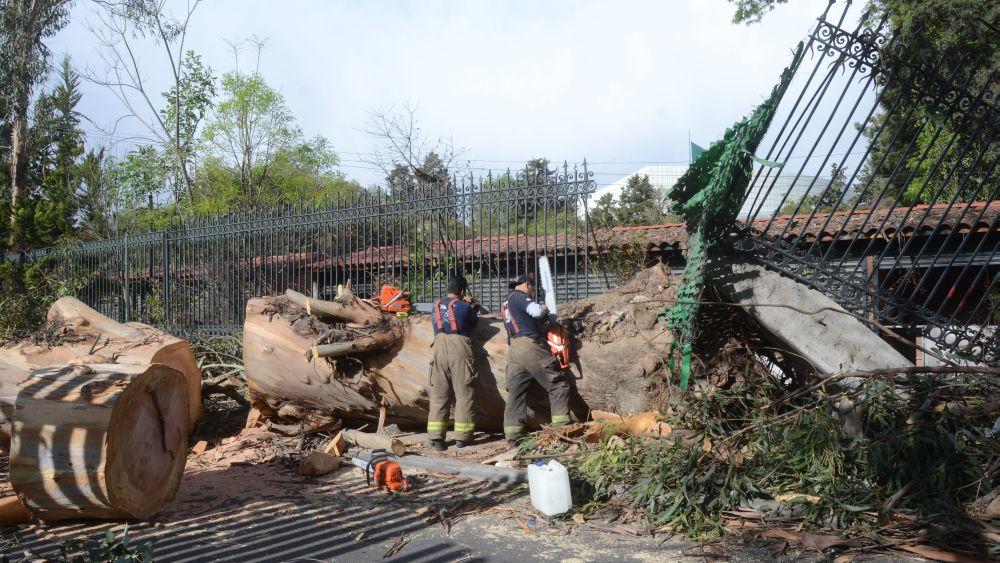 Se han reportado más de 1.144 caídas de árboles, postes y vallas.
