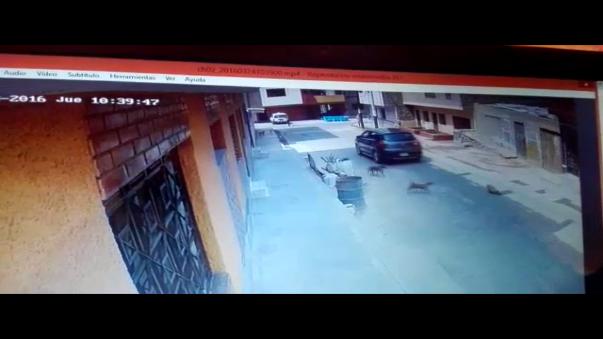 Como se aprecia en el vídeo, el carro pasa por encima del animal  y los demás perros y luego personas acuden hacia él.