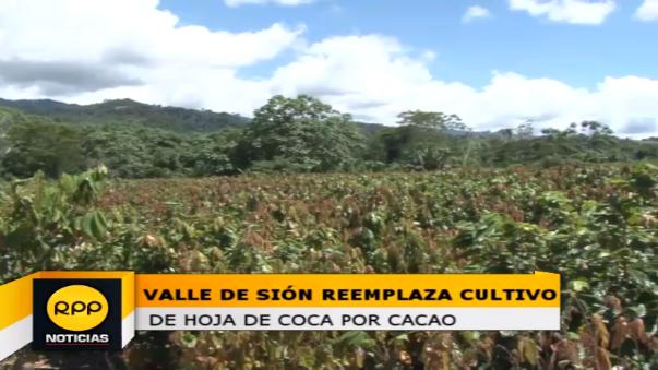 Los productores esperan formar su cooperativa y comercializar el cacao en el mercado internacional.
