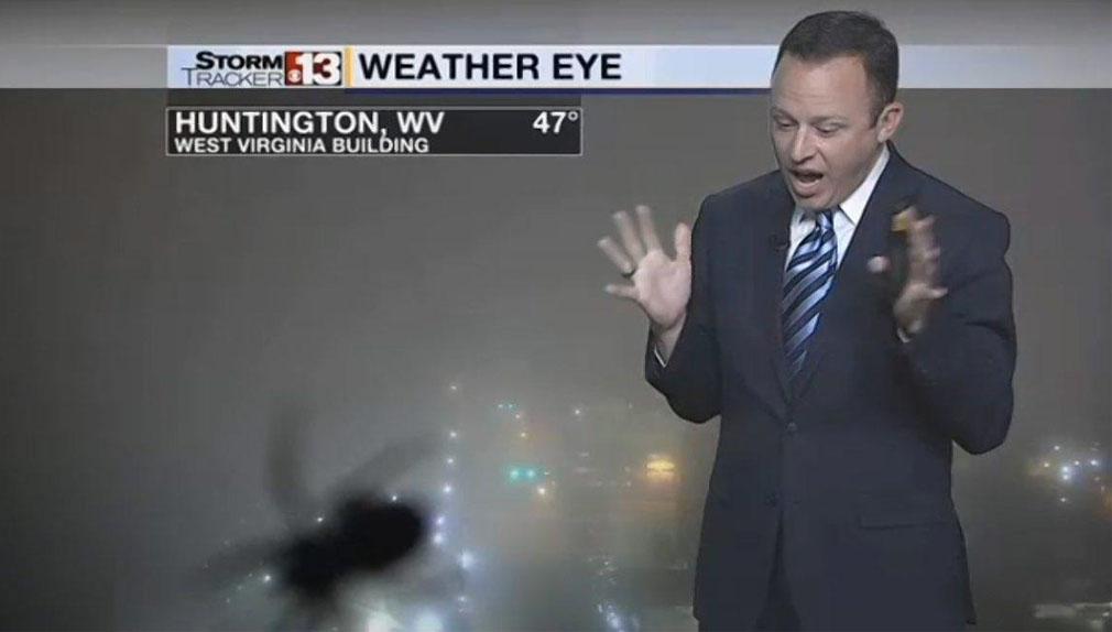 Bryan Hughes, del canal de televisión local WOWK, gritó cuando notó la araña gigante en el video.
