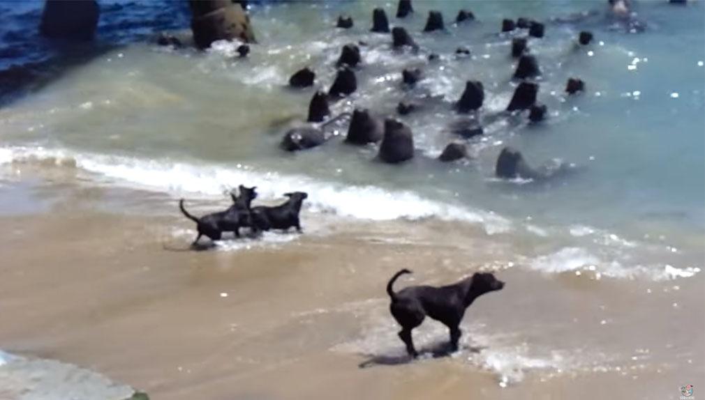 Según informa The Telegraph, el enfrentamiento ocurrió en una playa de Chile.