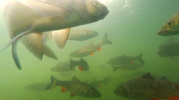 Un joven sumergió una cámara a un lago y captó sorprendentes imágenes. El video fue subido a Youtube el 12 de junio y no tardó en hacerse viral.