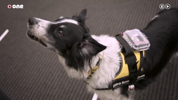 El proyecto FIDO ofrece a los perros los medios tecnológicos necesarios para que sus mensajes sean más precisos.