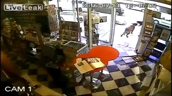 El asaltante se llevó una ingrata sorpresa cuando fue atacado por el animal. La escena fue captada por cámaras de seguridad y, posteriormente, el video fue subido a YouTube donde no tardó en hacerse viral.