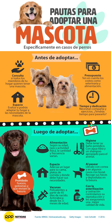 Sigue estas pautas para adoptar y criar una mascota