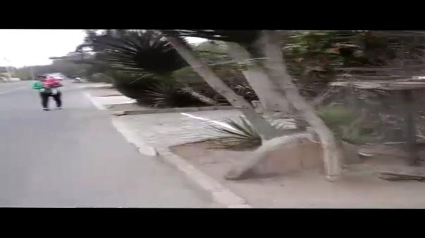 Las veredas de las primeras cuadras de la calle La Punta invadidas por rejas y árboles que impiden el tránsito peatonal en el distrito de La Molina