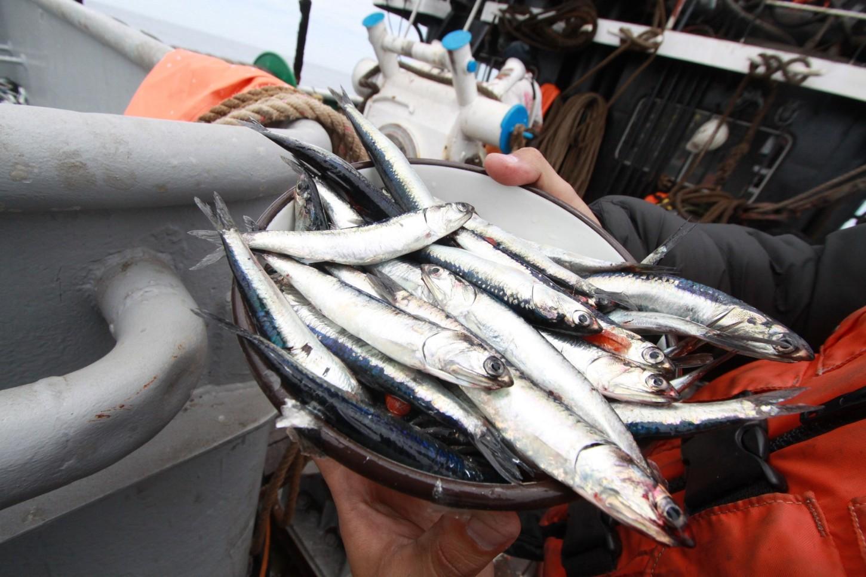 Produce: El decreto 011 no funcionó, la pesca de anchoveta será de la milla 5.