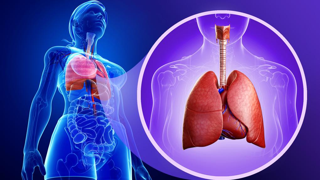 El sistema respiratorio se desarrolla hasta más o menos 9 a 10 años de edad, mientras que esta función comienza a disminuir notablemente a partir de los 30 años.