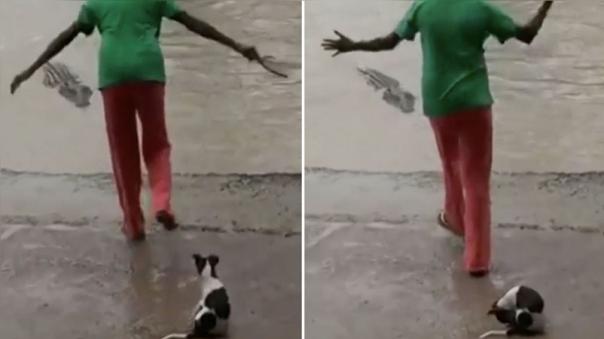 La mujer que ahuyentó a un cocodrilo de 4 metros con un solo golpe de sandalia.