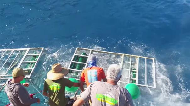 El incidente tuvo lugar en la isla mexicana de Guadalupe.