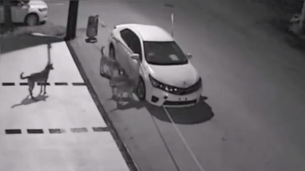 Las imágenes de una cámara de seguridad muestra cómo los perros callejeros destrozan el auto  de un mecánico.