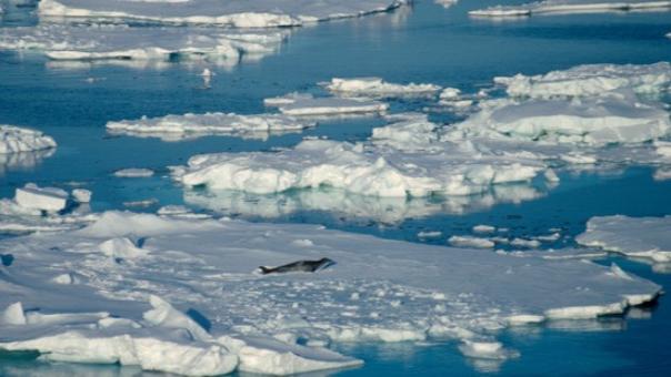 La mayoría de la comunidad mundial de pingüinos, ballenas, aves marinas y el calamar gigante se ubica en el océano Antártico.