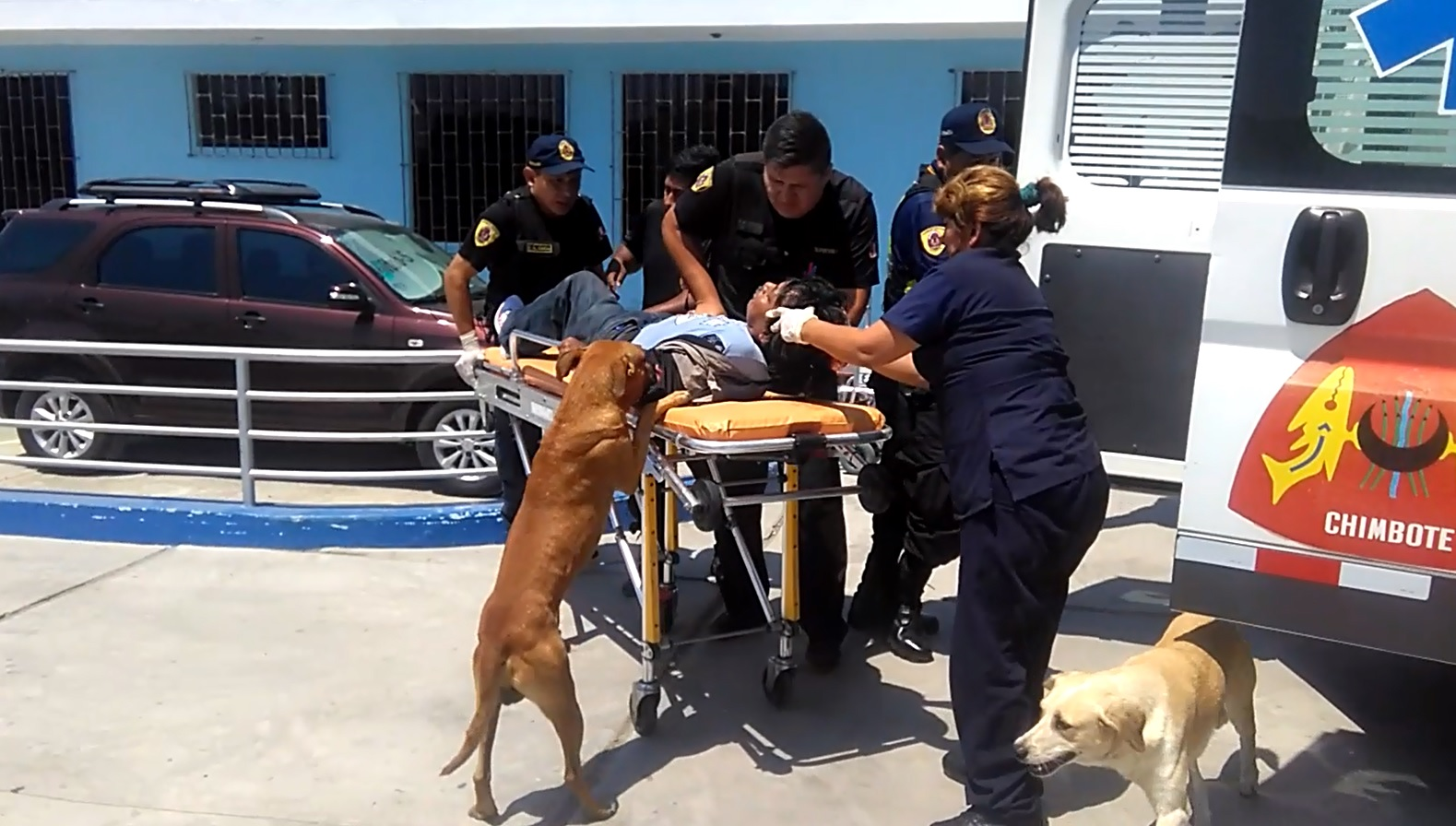Perros no abandonan a su dueño tras sufrir accidente.