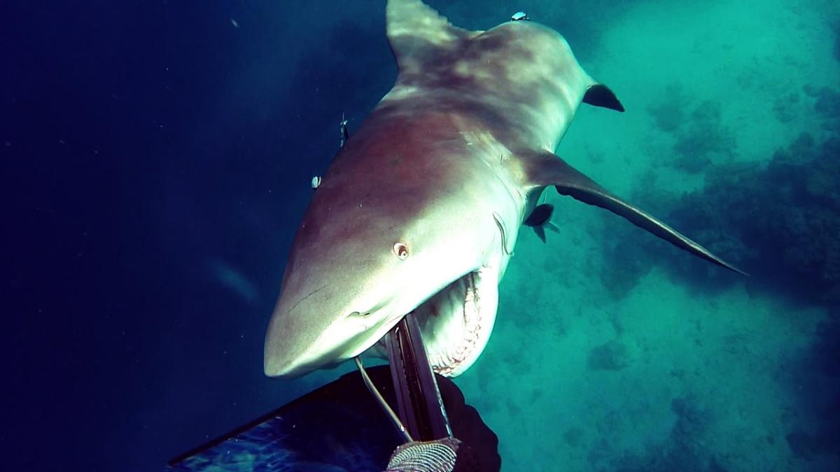 Un buceador graba cómo sobrevivió al ataque de un tiburón.