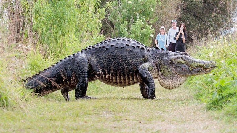 El animal es popular entre los visitantes asiduos de este centro natural y ya le pusieron nombre, 'Jorobado', debido a su largo y curvado lomo, aunque otros prefieren denominarlo 'Godzilla'.