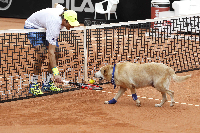 Los perros se convirtieron en asistentes durante un breve partido de exhibición