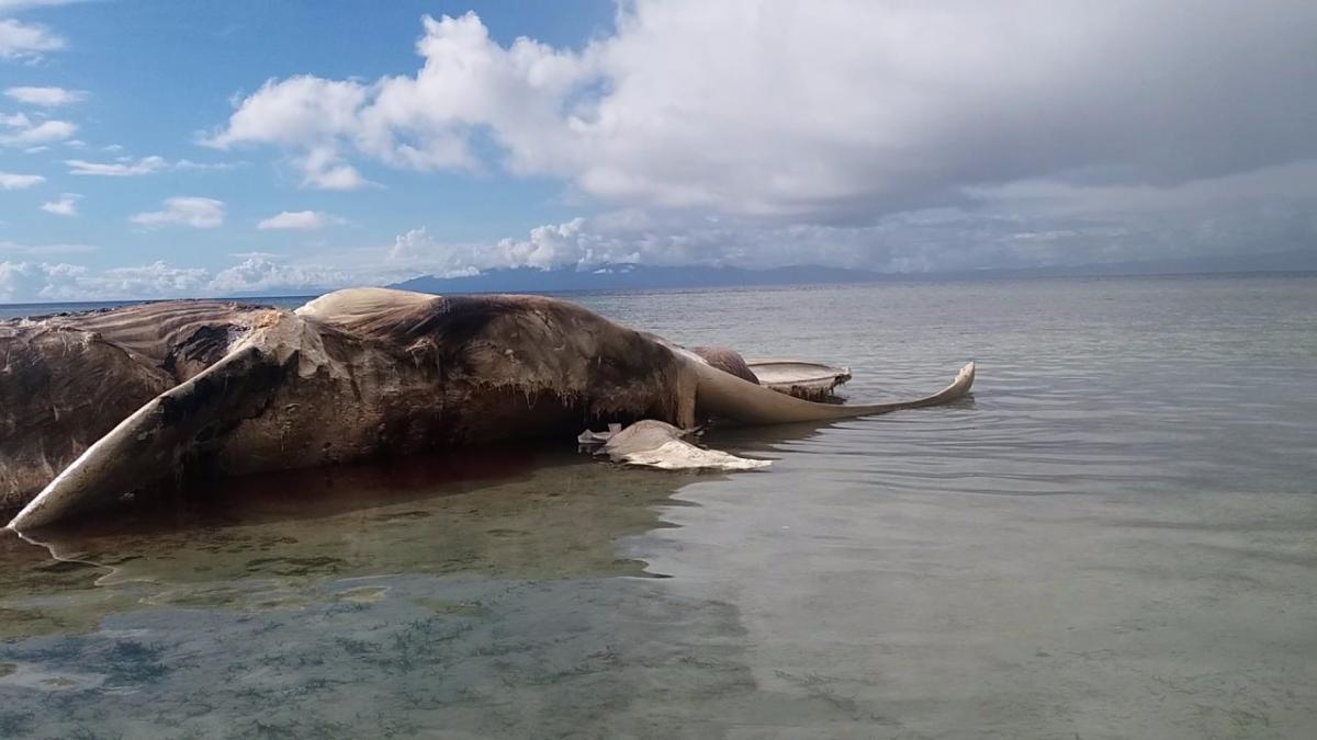 El animal, probablemente una ballena, llevaba al menos tres días muerto.