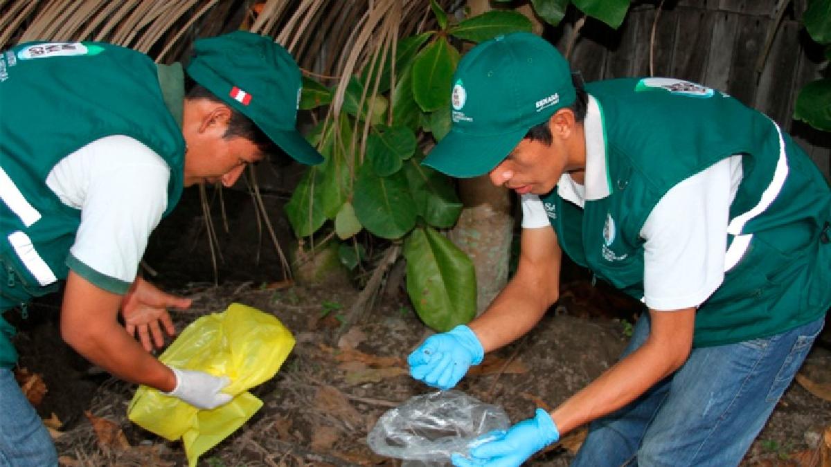 Las autoridades recomendaron manipular este tipo de moluscos con bolsas plásticas o guantes a fin de evitar el contacto con la piel.
