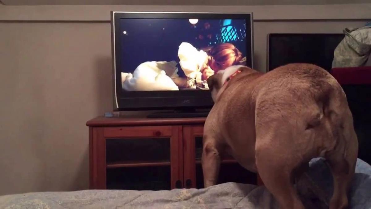 Acá su reacción frente a otra película de terror.