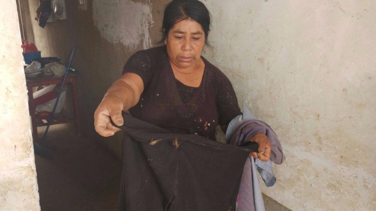 La plaga de grillos también han invadido las viviendas de las familias de los distritos de Pitipo, Ferreñafe, Íllimo y Chongoyape.