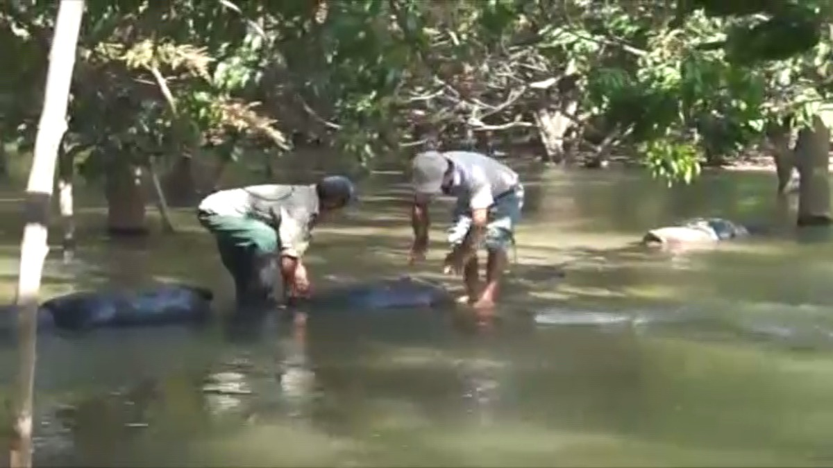 Tuvieron que colocar sacos de arena para desvíar el cause del río.