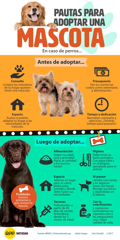 Pautas adopción mascotas