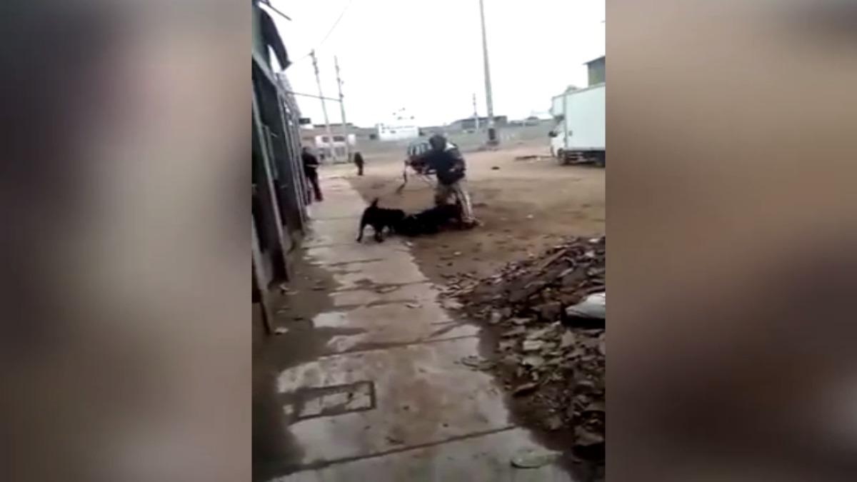 Esta sería la segunda vez que el perro ataca a un can de la zona