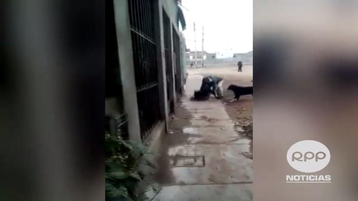 Pitbull ataco a otro can en Villa El Salvador. El uso del bozal es indispensable para evitar incidentes como este.