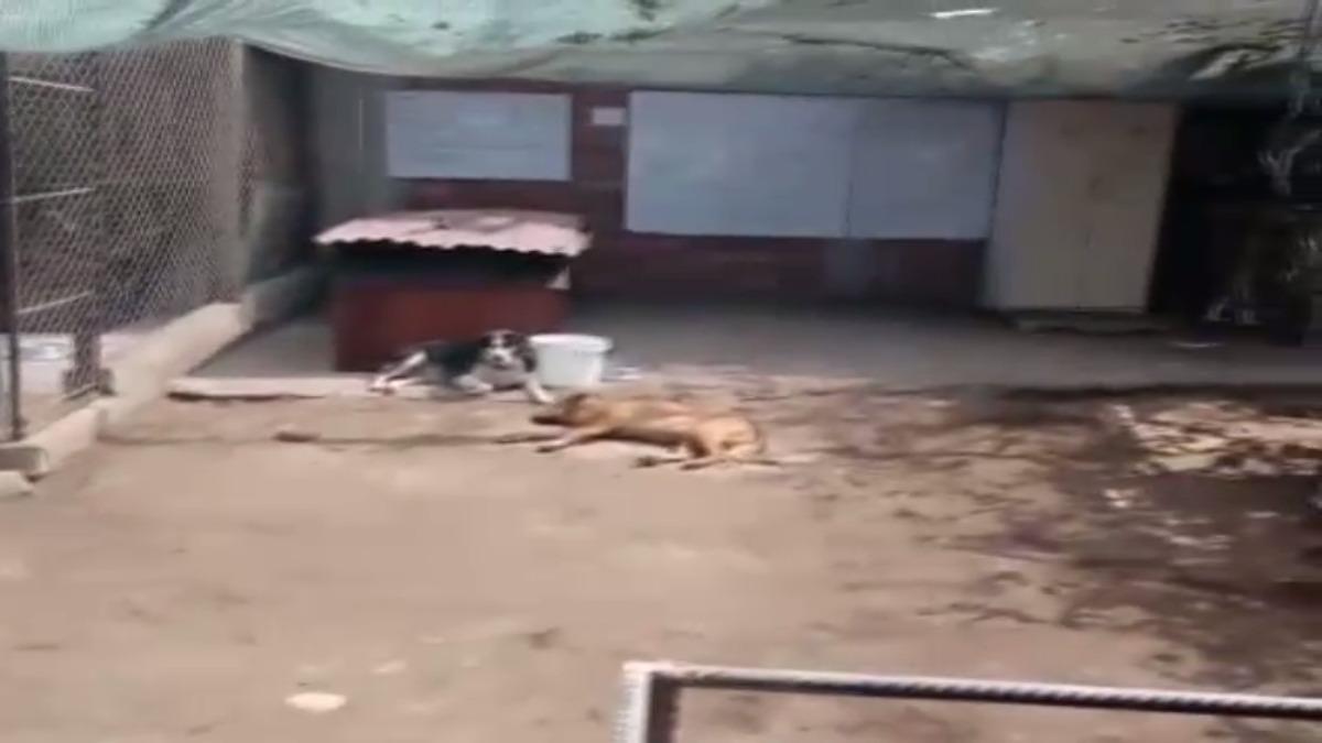 Las mascotas viven en uno de los fundos de la universidad.