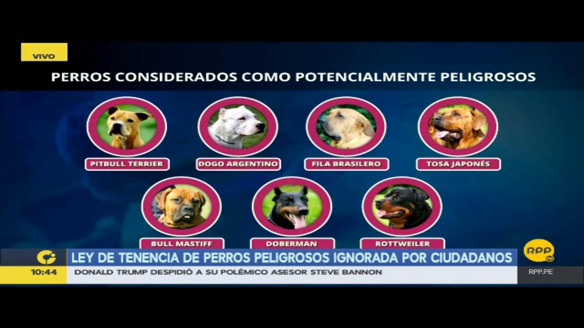 Ley de tenencia de perros peligrosos ignorada por ciudadanos.