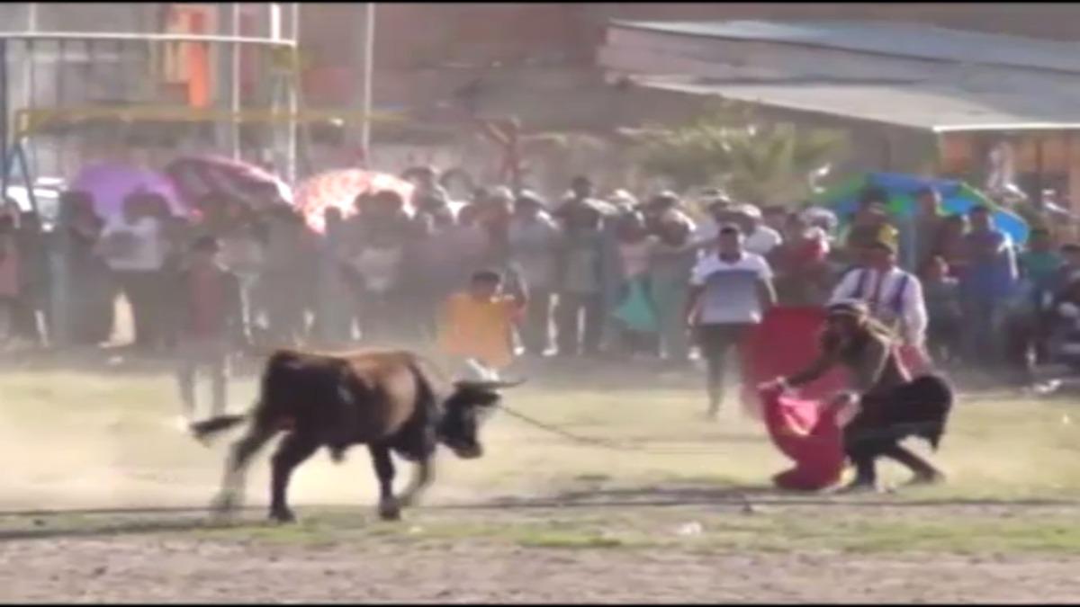 Hombres ebrios atacados por toro en Huamanga.