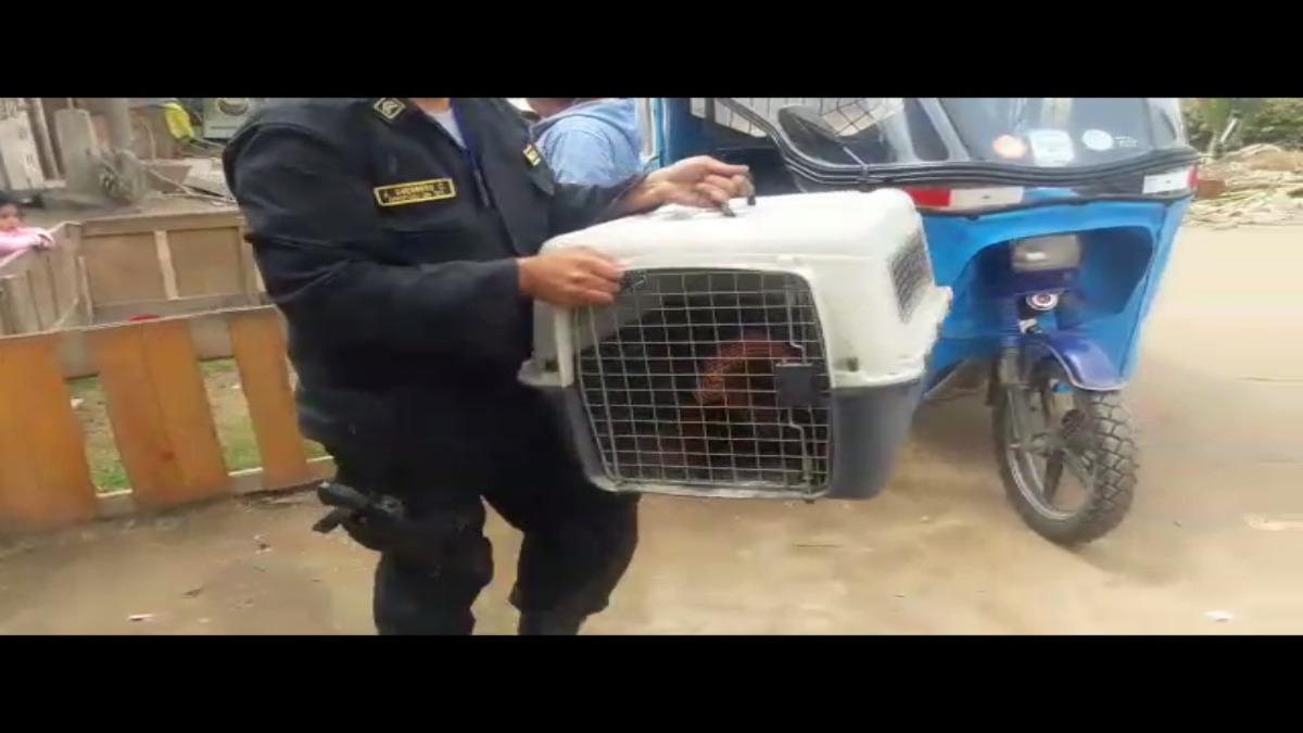 Policía de Protección del Medio Ambiente contribuyo al recate del mono.