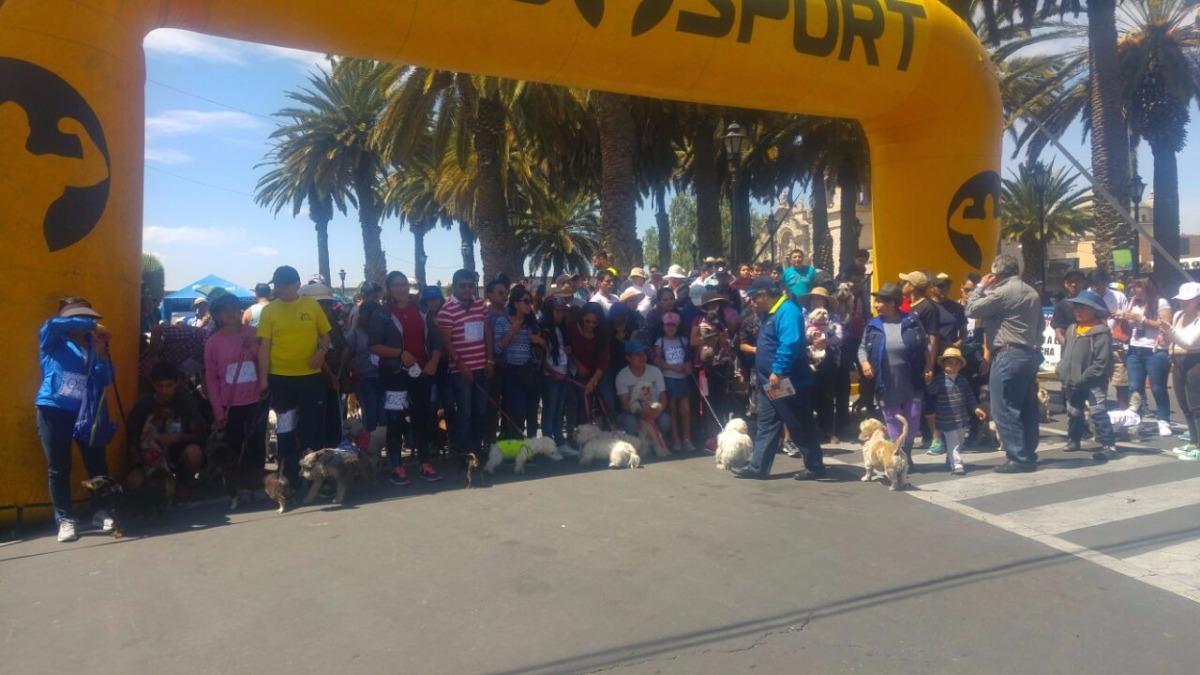 Maratón canina en la ciudad de Arequipa.