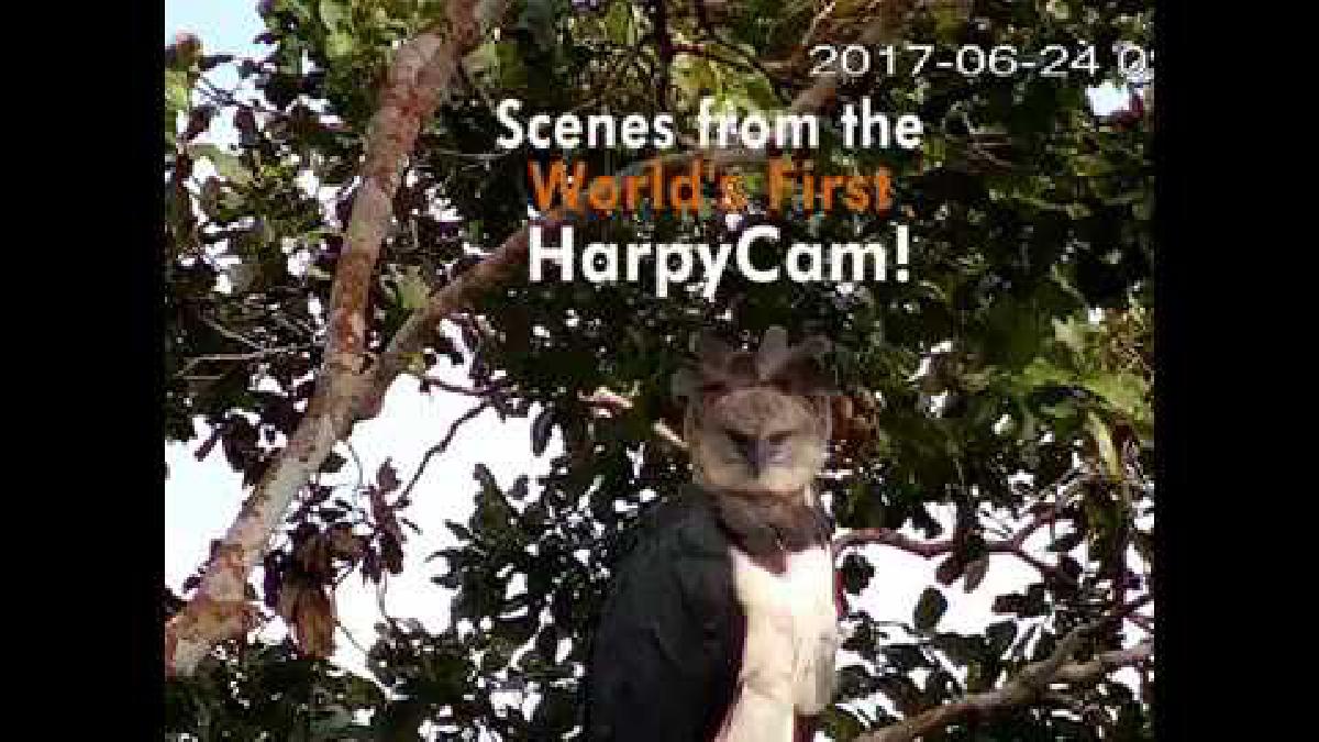 Registro del primer mes tras la instalación de la cámara trampa en el nido.