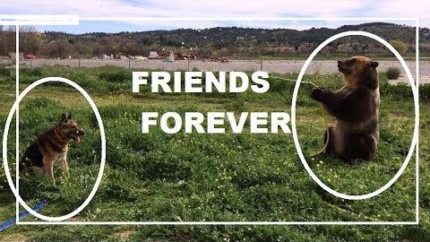 La tierna escena de los dos animales jugando con una manguera fue captada en España.