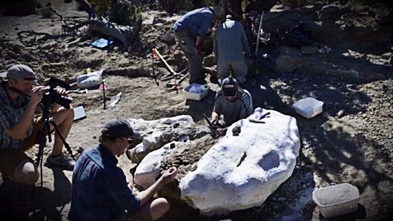 Los científicos creen que la conservación de los fósiles se dio debido a que el tiranosaurio fue enterrado o bien por un canal fluvial o por un evento de inundación en la llanura.