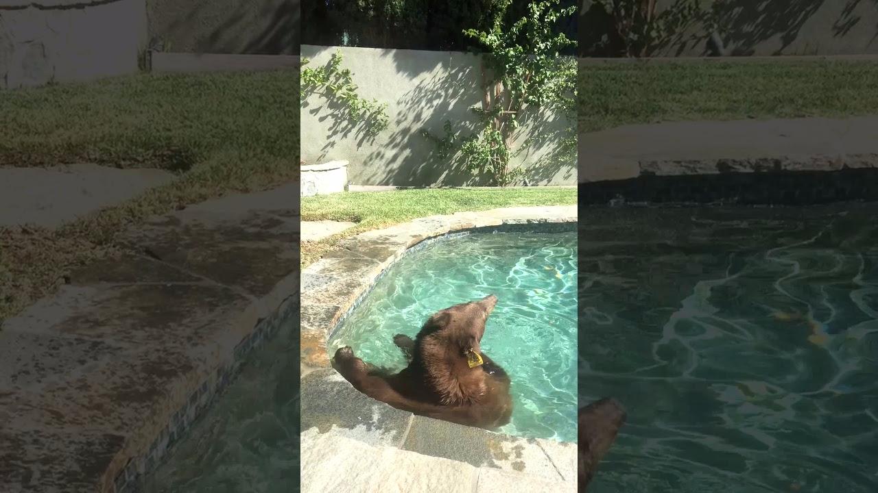 Las increíbles imágenes fueron filmadas por el dueño de una casa de la localidad de Monrovia, California.