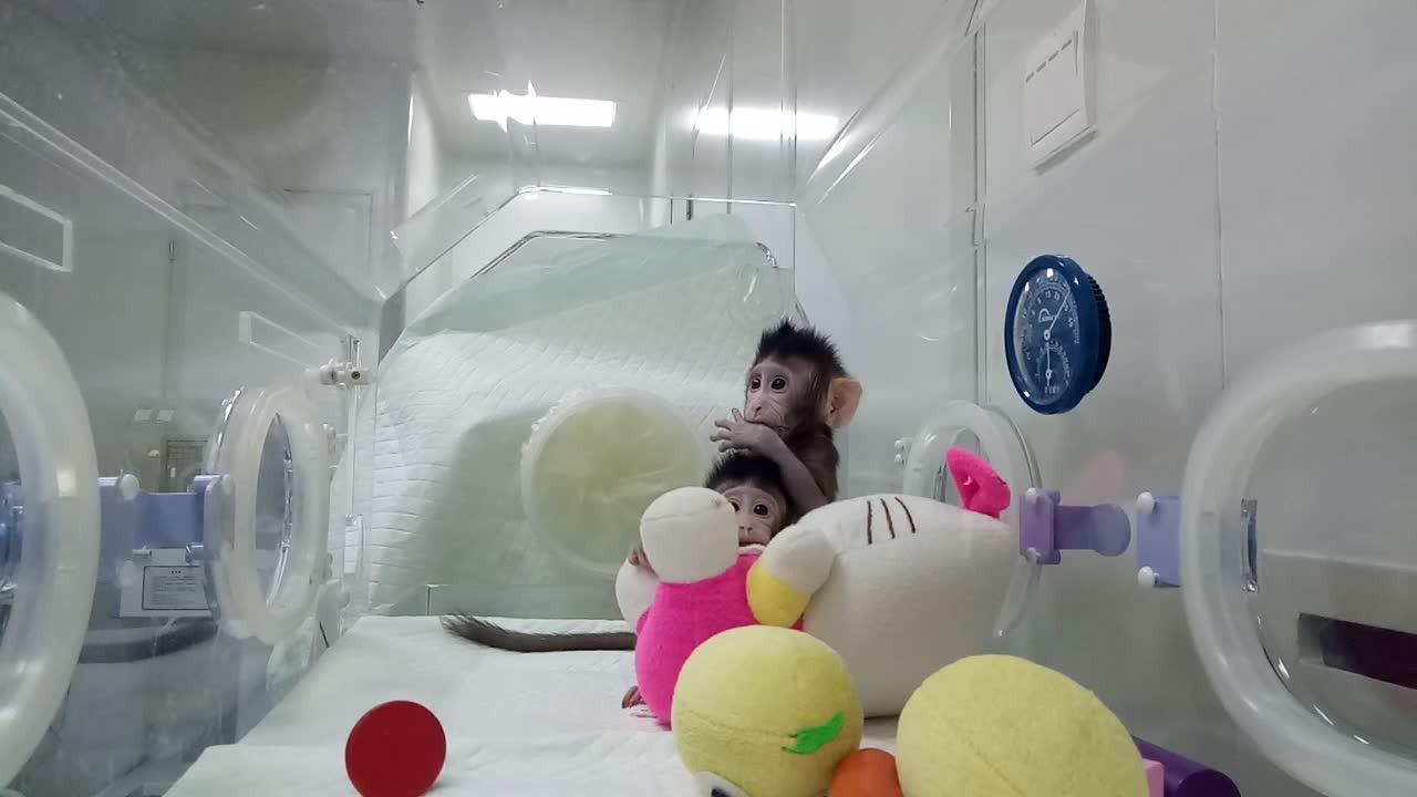 Un video difundido por la Academia China de Ciencias.
