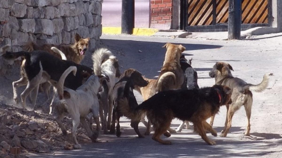 Hasta la fecha, la gerencia de Salud vacunó a 120 canes en el distrito de Mariano Melgar y 47 canes en Cerro Colorado.