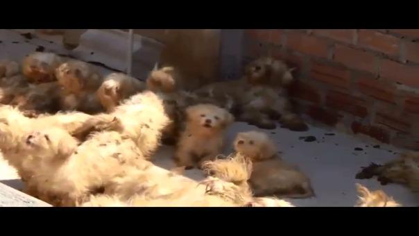 Video que muestra el estado en el que fueron encontrados los perros.