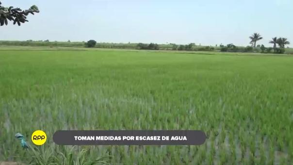 Se instalaron 40 mil hectáreas, pero solo fueron autorizadas 30 mil