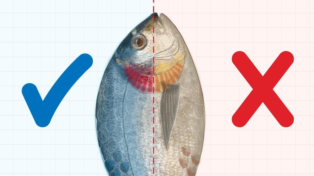 Los beneficios del pescado en la alimentación son muchos: mejora la calidad del sueño, facilita el aprendizaje, incrementa la memoria y favorece la plasticidad neuronal.
