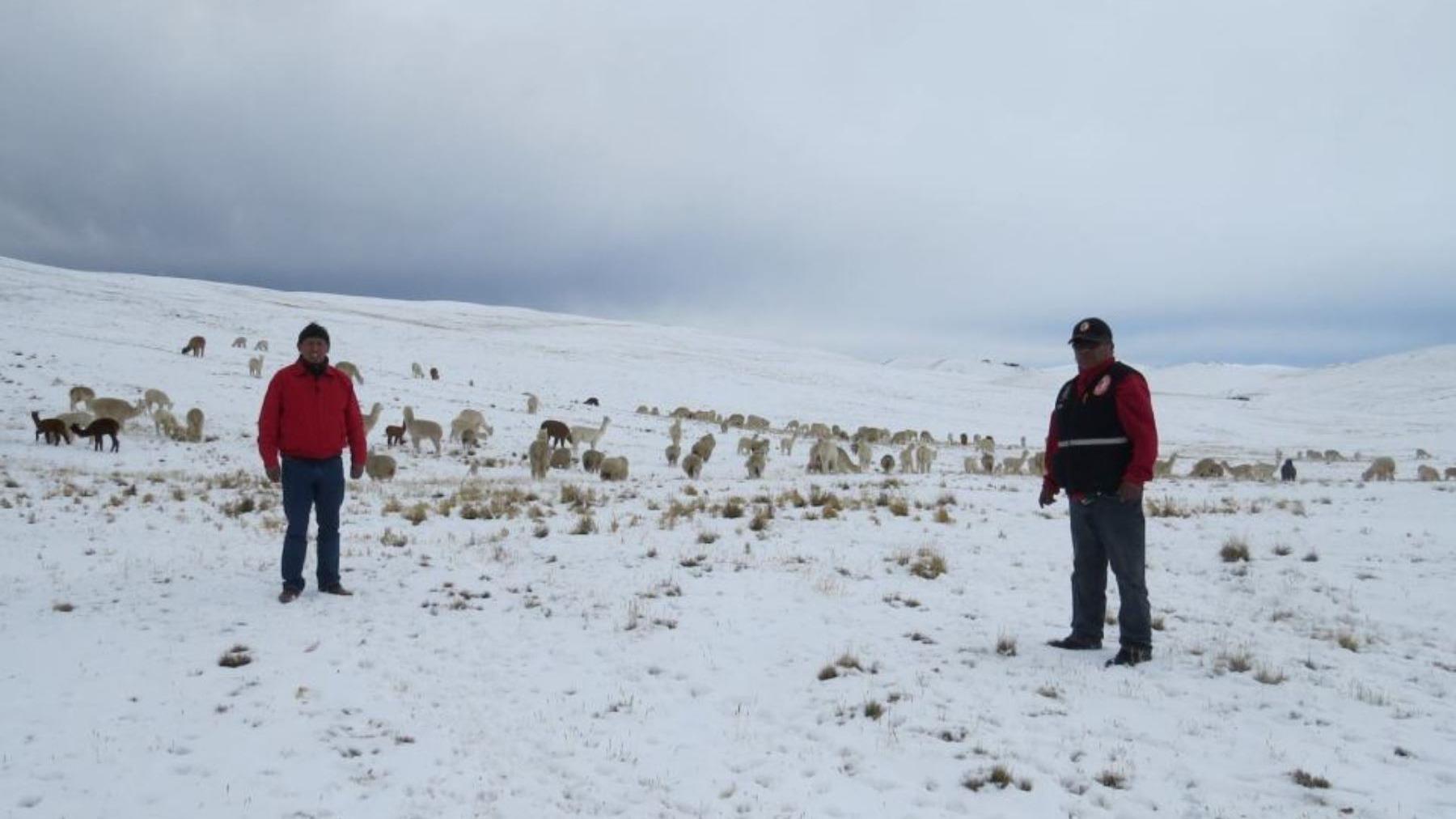 Desde el INEI comentaron que las bajas temperaturas registradas en la zona centro del país afecta a comunidades pecuarias.