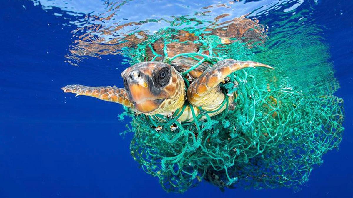 El plástico amenaza la vida en el mar y en la tierra.